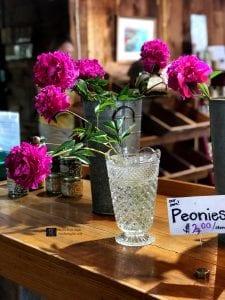 pink peonies in clear vase
